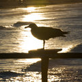 Seagull silhouette Stock Photos