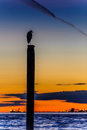 Seagull silhouette resting on a post at sunset Royalty Free Stock Photo