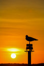 Seagull silhouette in sunset Royalty Free Stock Photo