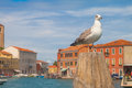 Seagull sitting on a pole with the beautiful murano island on the background Stock Photography