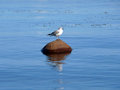 Seagull is sitting on a rock in the middle of a lake