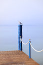 Seagull sitting on a wooden pier garda italy Stock Photography