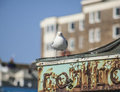 Seagull standing on a green roof. Royalty Free Stock Photo