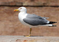 Seagull standing on a roof Stock Image