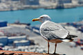 Seagull standing on a roof near harbour Stock Image
