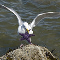 Seagull Starfish Royalty Free Stock Photo