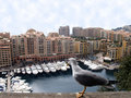 Seagull staring at yachts in Monaco