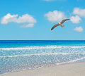 Seagull in Stintino Stock Photography