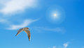 Seagull and sun gray flying under a bright Stock Image