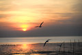 Seagull with sunset in the background sunrise beach Royalty Free Stock Photos