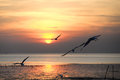 Seagull with sunset in the background sunrise beach Royalty Free Stock Image