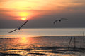 Seagull with sunset in the background sunrise beach Royalty Free Stock Images