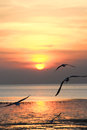 Seagull with sunset in the background sunrise beach Stock Photo