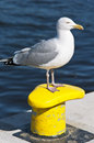 Seagull at te polish port of ustka Stock Image