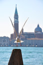 Seagull in Venice Royalty Free Stock Image