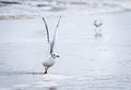 Seagulls Royalty Free Stock Photo