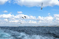 Seagulls against a blue sky with white clouds Royalty Free Stock Photo