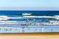 Seagulls on a Beach Royalty Free Stock Photo