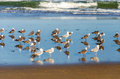 Seagulls on a beach by the pacific ocean in lincoln city oregon Stock Photo