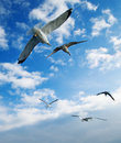 Seagulls bird fly in sky gull Stock Photos