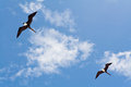 Seagulls on a Blue Sky Royalty Free Stock Photos