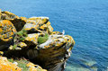 Seagulls from Cies Islands (Galicia, Spain) Royalty Free Stock Photo