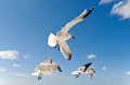 Seagulls in flight over the ocean Royalty Free Stock Photo