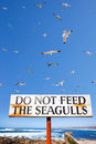 Seagulls fly above do not feed seagulls sign old wooden requesting that you the surrounded by Royalty Free Stock Photo