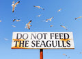 Seagulls fly above do not feed seagulls sign old wooden requesting that you the surrounded by Royalty Free Stock Photography