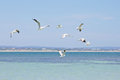 Seagulls Flying In Blue Sky Ov...