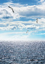 Seagulls flying over dark blue sea Stock Photo