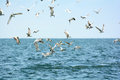 Seagulls Are Flying Over The Sea