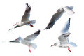 Seagulls flying style Isolated on white background. Royalty Free Stock Photo