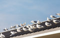 Seagulls gathered on pier roof many the metal of a Royalty Free Stock Image
