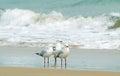 Seagulls huddled together at edge of surf waves