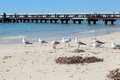 Seagulls near Busselton jetty West Australia Stock Photos