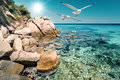 Seagulls over shallow water in northern greece by the shore sithonia Stock Photo
