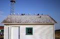 Seagulls rest on a roof near fort warden state park in port townsend washington Royalty Free Stock Photos