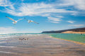 Seagulls by the shore of costa calma in fuerteventura canary islands spain focus on Stock Photos