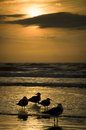 Seagulls silhouetted on the beach Stock Photo
