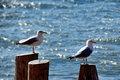 Seagulls at staten island ferry winter Royalty Free Stock Image