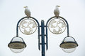 Seagulls on a street lantern two looking in different directions Stock Photo
