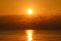 Seagulls in the Sunset Royalty Free Stock Images