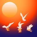 Seagulls at sunset stock image Stock Photography