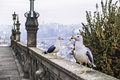 Seagulls two on a banister resting Royalty Free Stock Photography