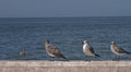 Seagulls Waiting in the Port Royalty Free Stock Photo