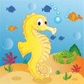 Seahorse Photo stock