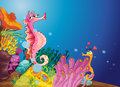 Seahorse love Royalty Free Stock Images