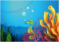 A seahorse near the coral reefs Royalty Free Stock Photography