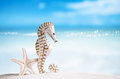Seahorse with white starfish on white sand beach, ocean,  sky an Royalty Free Stock Photo